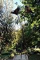Papaveri alti alti (Rignano sull'Arno) 02.jpg