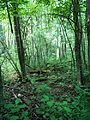 Parc-nature du Bois-de-l-ile-Bizard 07.jpg