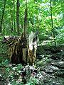 Parc-nature du Bois-de-l-ile-Bizard 16.jpg