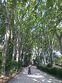 Park in Catania, Sicily.jpg