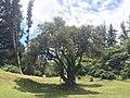 Parque Ecológico de El Boliche - Quito, Equador - panoramio (9).jpg