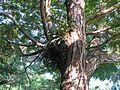 Parque La Llovizma 2003 043.jpg
