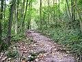 Path, Eggerslack Wood - geograph.org.uk - 1504067.jpg