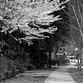 Path at night (3464397963).jpg