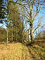 Path in Chase Woods near Tollard Royal - geograph.org.uk - 688464.jpg