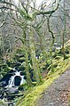 Path to Arthog Falls - geograph.org.uk - 120978.jpg