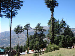 Patnitop: a view towards the mountains