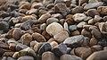 Pebbles-5232.jpg