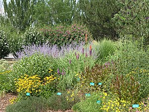English: Perennials border in Summer.