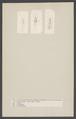 Perla - Print - Iconographia Zoologica - Special Collections University of Amsterdam - UBAINV0274 004 03 0037.tif