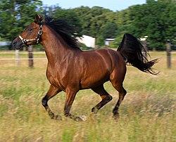Pferd wikiquote da pferde oft aus dem zgel flchten will ich doch lieber geflgel zchten erich mhsam schttelreim frhliche kunst 1 2 juli 1902 thecheapjerseys Images