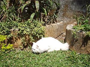Persian cat Matahari, aged 8 months, hunting i...