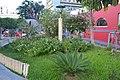 Pflanzen im Zentrum von Florianópolis 4 (22125923821).jpg