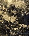 Photographe non identifié - Dans le jardin du photographe ou du peintre, Algérie, 1920.jpg