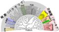 Phylogenetic Tree of Prokaryota-ja.png