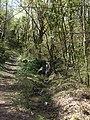 Piccola cascata nei pressi di Fonte Vinaglia - panoramio.jpg