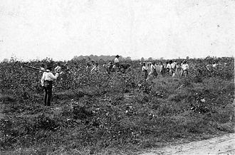 Louisiana State Penitentiary - Picking cotton at Angola, c. 1900