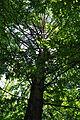 Pidhorodne-modryna-n2-15058078.jpg
