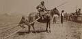 Piegan man on horse with wife and child on a travois in 1907 (HS85-10-18748) (cropped).jpg
