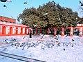 Pigeons in Shrine of Mian Mir, Lahaore.jpg