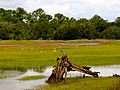Pinckney Island National Wildlife Refuge (5958501790).jpg