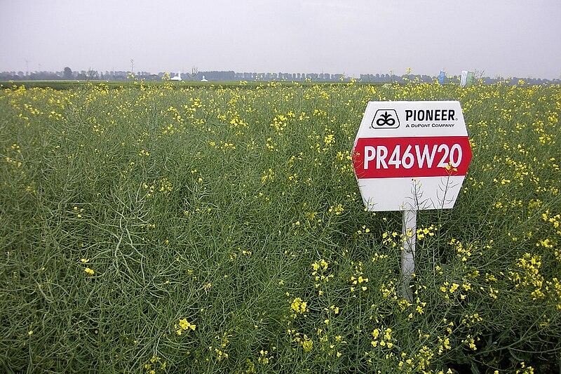 File:Pioneer Hi-Bred PR46W20.jpg