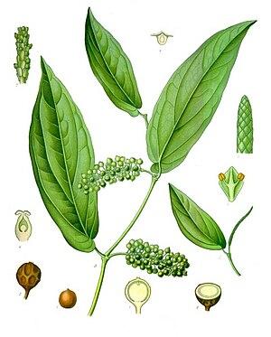 Piper cubeba - Piper cubeba, from Köhler's Medicinal Plants (1887)
