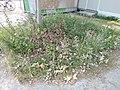 Place Valhubert végétalisation naturelle.jpg