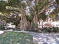 Plaza Gabriel Miro, 16 July 2016 (2).JPG