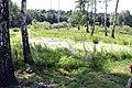 Pond - panoramio (30).jpg