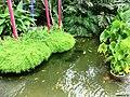 Pond - panoramio (35).jpg