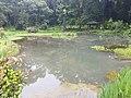 Pond View 20170706 160240.jpg
