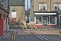 Pony and Rider (5441440874).jpg