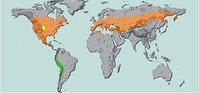 Carte figurant l'aire de répartition du doryphore