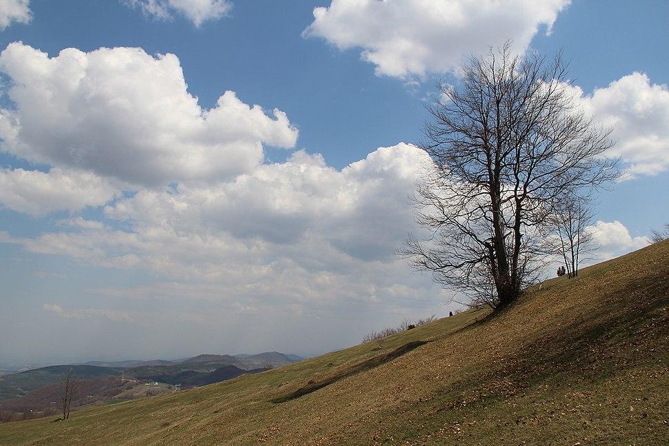 Povlen - zapadna Srbija - severni obronci Malog Povlena - mesto Kneževo polje detalj 10
