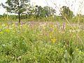 Prairie Remnant Near Chicago Illinois.jpg