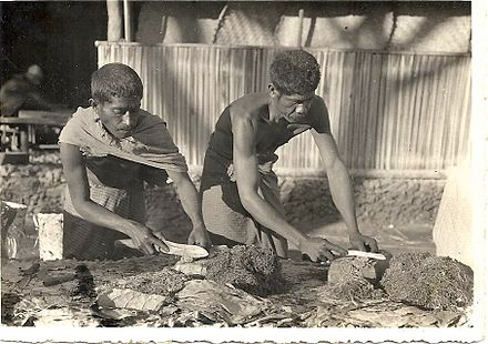 Tobacco production in Portuguese Timor in the 1930s Preparando o tabaco em Balibo.jpg