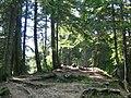 Prin pădurea cu brazi - panoramio.jpg