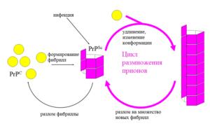 Прионы реферат по микробиологии 5144