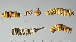 Prosopisstrombulifera.jpg