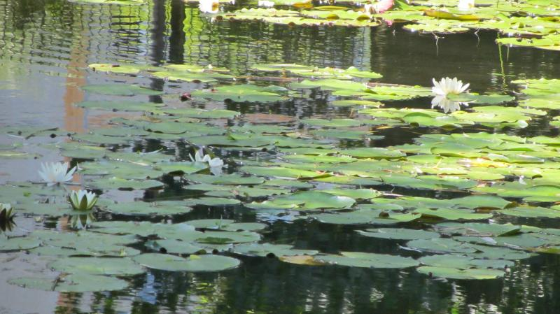 File:Protected park pond Altglienicke 2.djvu