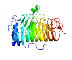 Protein MS4A1 PDB 1S8B.png