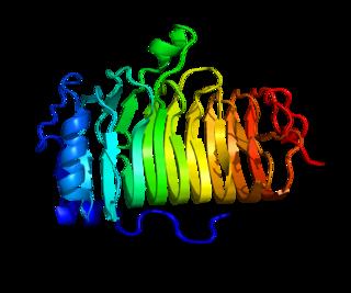 CD20 protein-coding gene in the species Homo sapiens