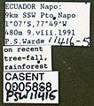 Pseudomyrmex alustratus casent0005868 label 1.jpg