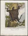 Pteromys petaurista - 1700-1880 - Print - Iconographia Zoologica - Special Collections University of Amsterdam - UBA01 IZ20400091.tif