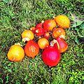 Pumpkin Harvest.JPG