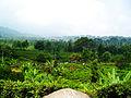 Puncak - Bogor - West Java.jpg