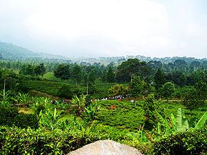 Bogor Regency - Image: Puncak Bogor West Java