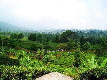 Puncak - Bogor - West Java