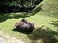 Putrajaya's Botanical Garden 21.jpg